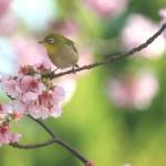 自然界のもの(動物・植物etc…)って、すんごい色の参考になります。