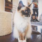 なんという気品のある猫か!
