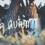 秋を感じたいな〜。ベタに紅葉とか(OvO)